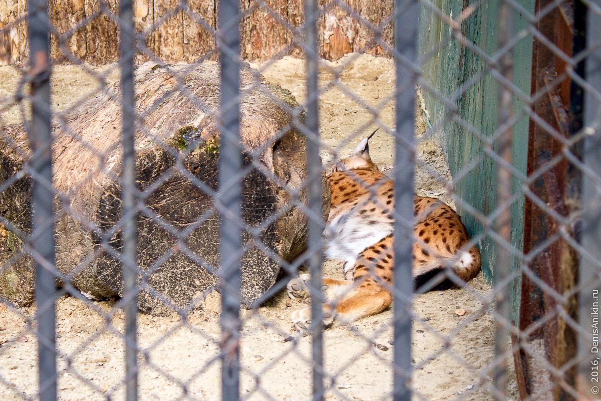 Пензенский зоопарк. Животные 21