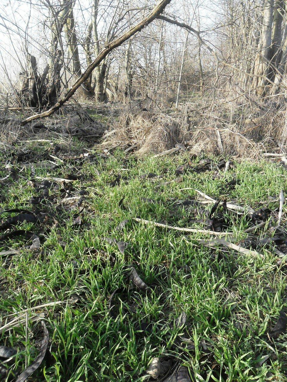 В лесу ... SAM_5526.JPG