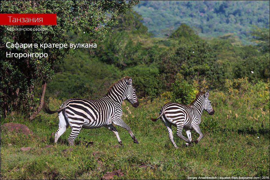 Сафари в Нгоронгоро