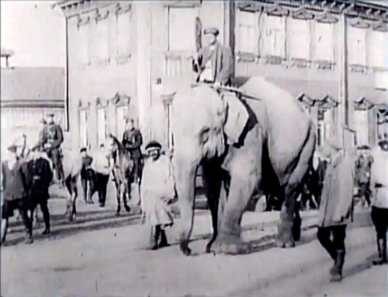 Слон.jpg