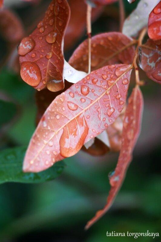 Листья после дождя