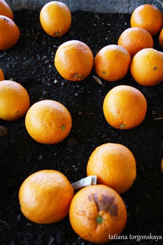Апельсины под деревом