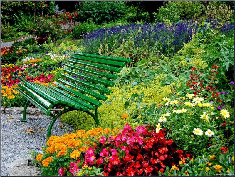 Картинки по запросу сад