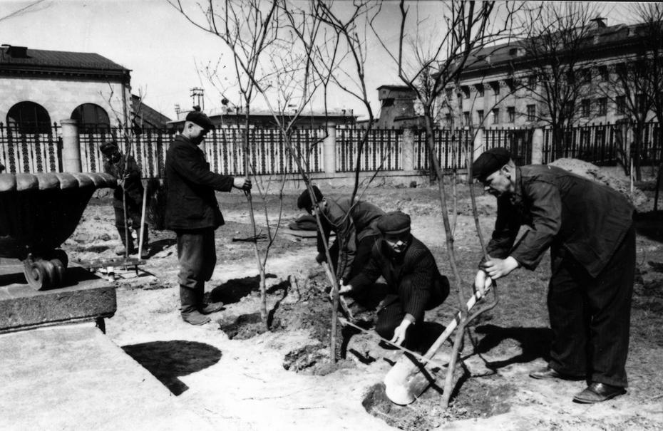 1955.05.25. Работы по озеленению привокзальной площади