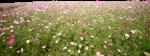 Lug_Grass_Flower (25).png