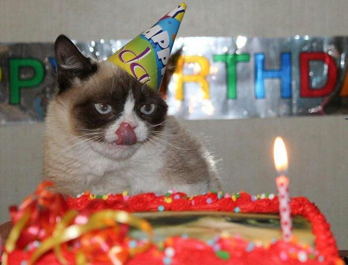 Даже на день рождения, Grumpy Cat сердитый