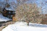 Яблоня в саду.....IMG_8900BE.jpg