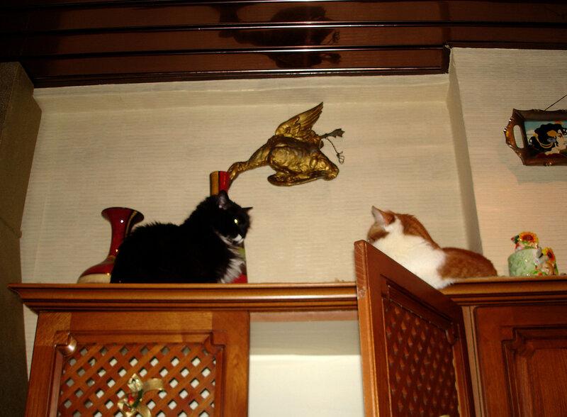 Кошкин дом.