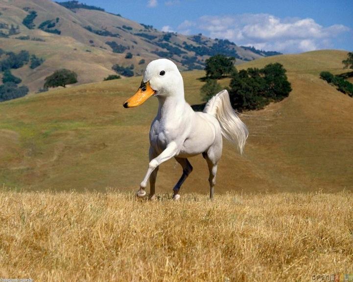 Странные животные фотоманипуляции