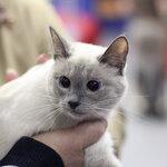 Выставка кошек 02-02-2013 ВВЦ