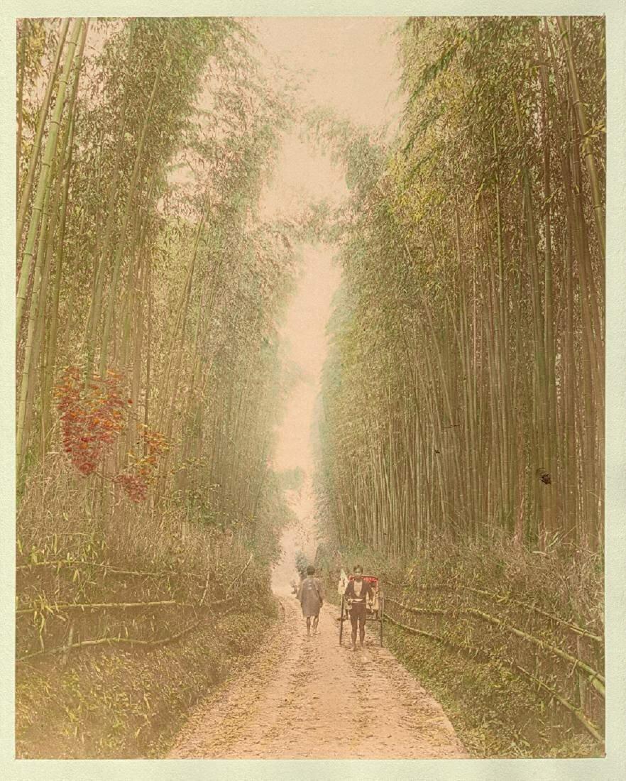 В бамбуковой роще рядом с Киото