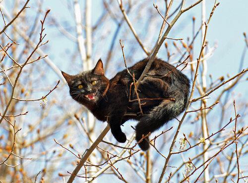 Весна... коты прилетели!