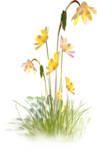NLD Flower cluster 2.png
