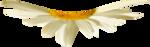 NLD Flower shelf.png