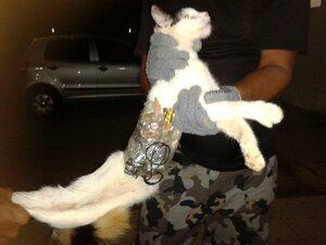 В Бразилии кот доставлял заключённым контрабанду
