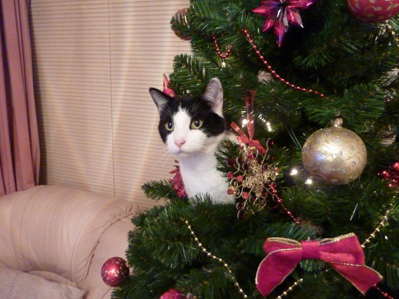 Коты на ёлке - фото 14