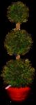 feli_l_greenery in a pot.png