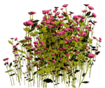 Lug_Grass_Flower (36).png