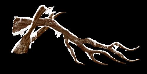 сломанное дерево