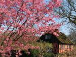 Spring (18).jpg
