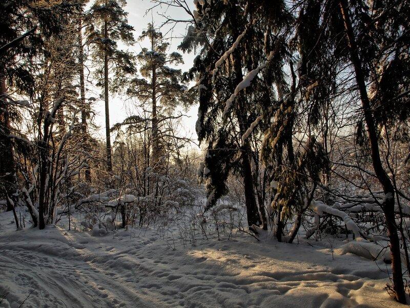 лыжня в зимнем лесу