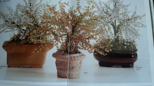 Весеннее дерево - Страница 5 0_a6cbe_5b8f75ec_L