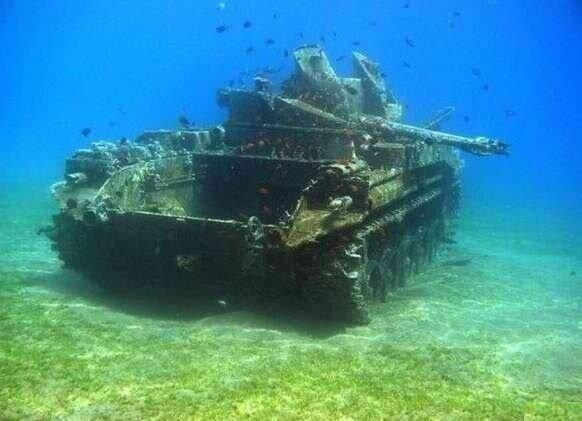 В океане между рыбами развернулась гражданская война. США заявили, что не останутся в стороне!