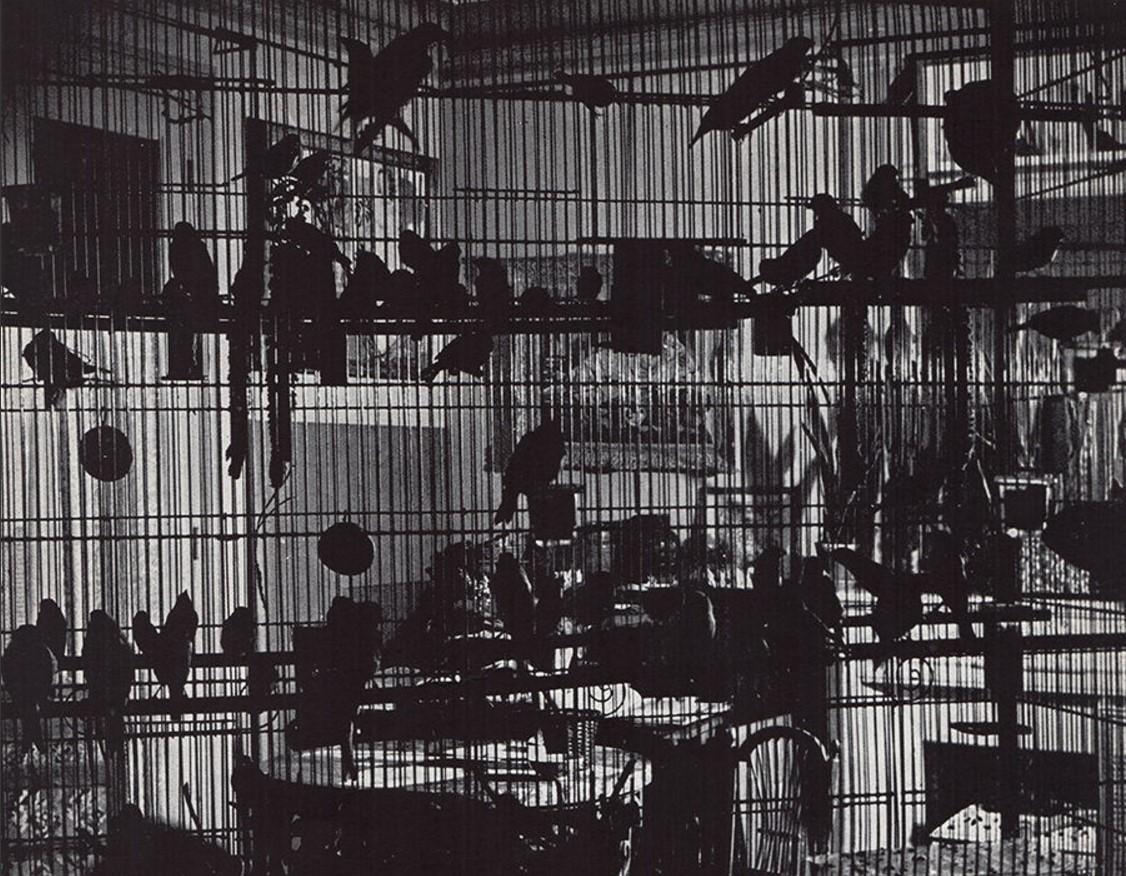 1937. Птицы Анри Матисса