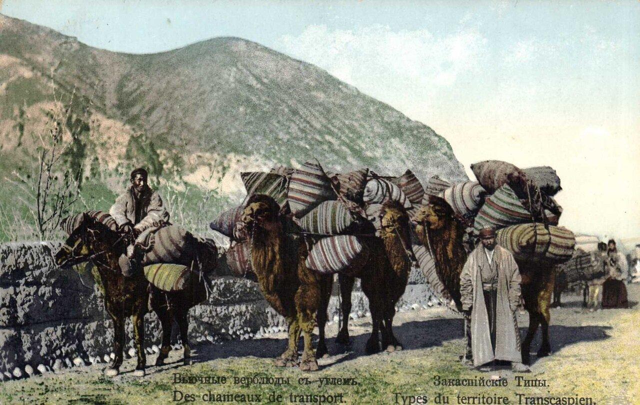 Вьючные верблюды с углем