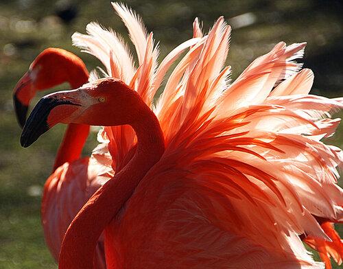Солнечные птицы