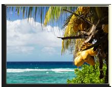 Сейшелы. Coconut palm tree. Фото Elena Kozlova - Depositphotos