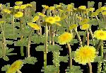 Lug_Grass_Flower (15).png