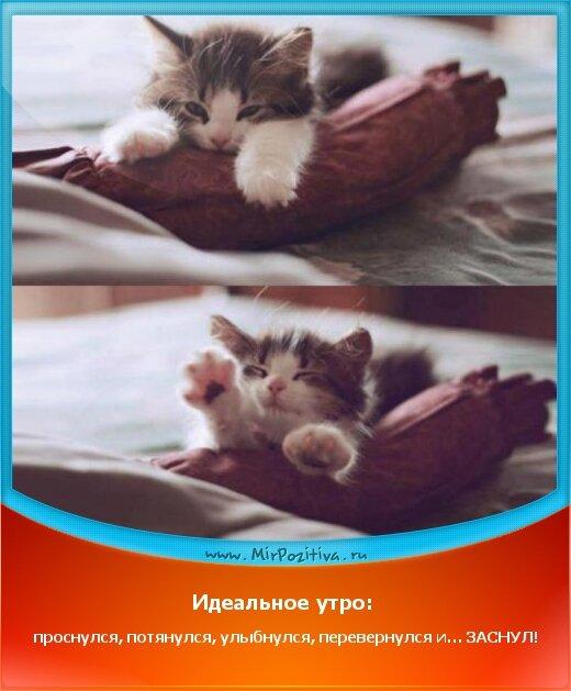Позитивчики Недели: Идеальное утро: проснулся, потянулся, улыбнулся, перевернулся и… ЗАСНУЛ!
