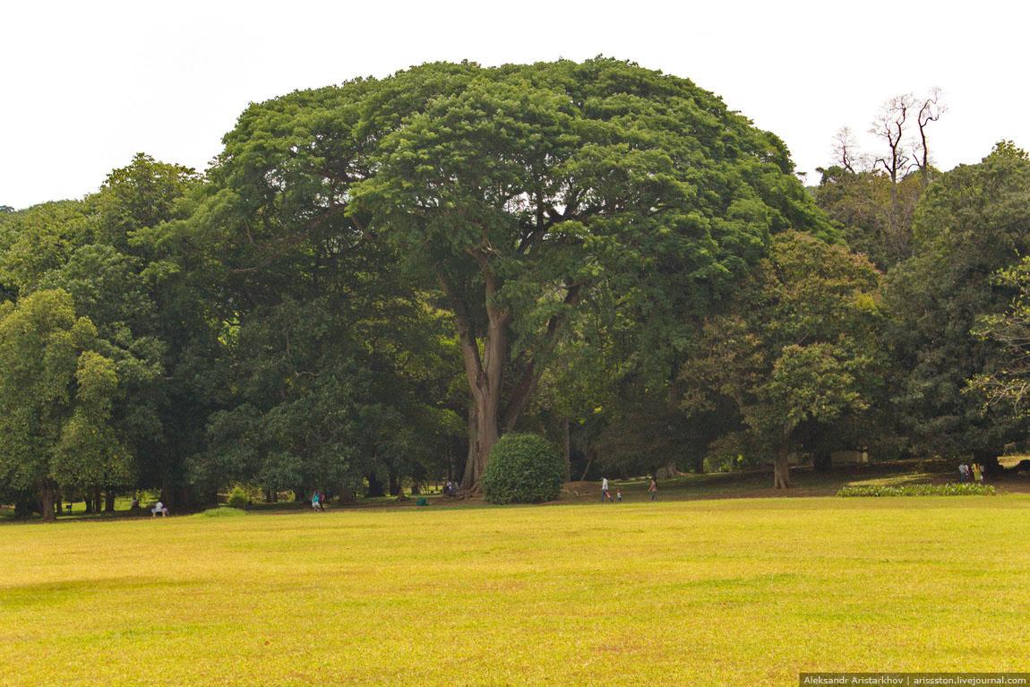 Шри-Ланка_Священный Канди_05
