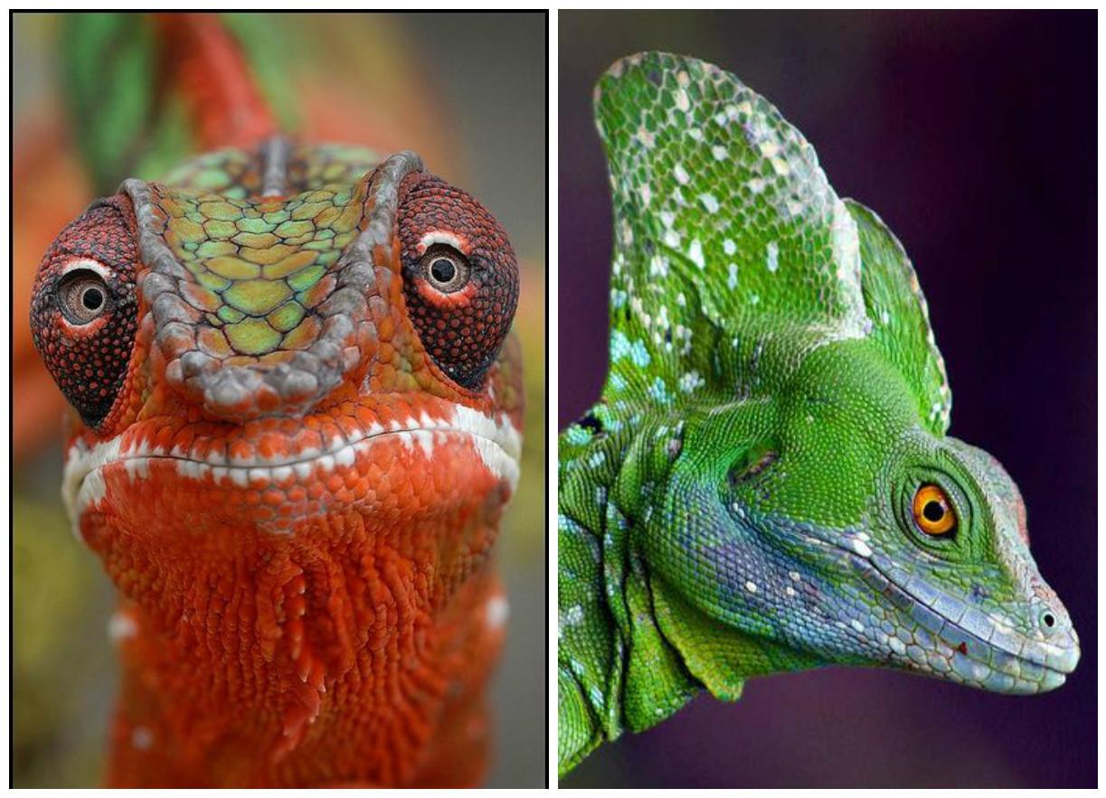 Маленькие драконы нашей планеты (45 фото)