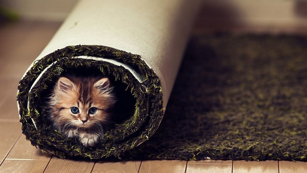 Котёнок Daisy от Ben Torode