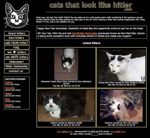 Коты похожие на Гитлера