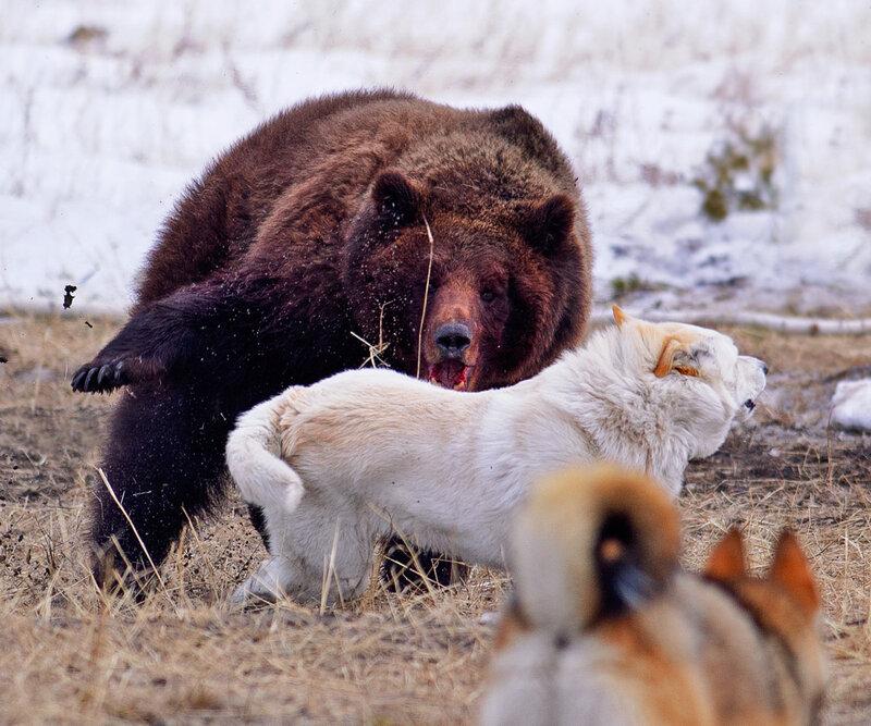 все картинки животных якутии