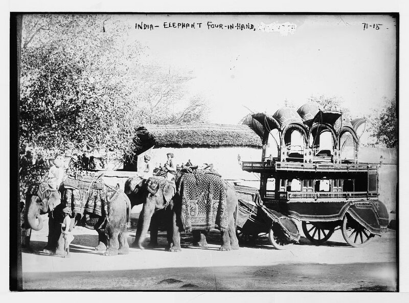 Four elephants pulling carriage, India 1922.