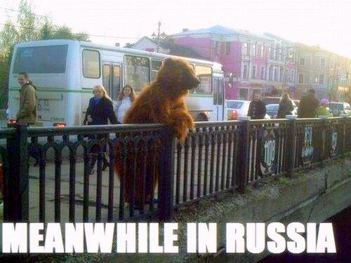 Медведь во Владимире
