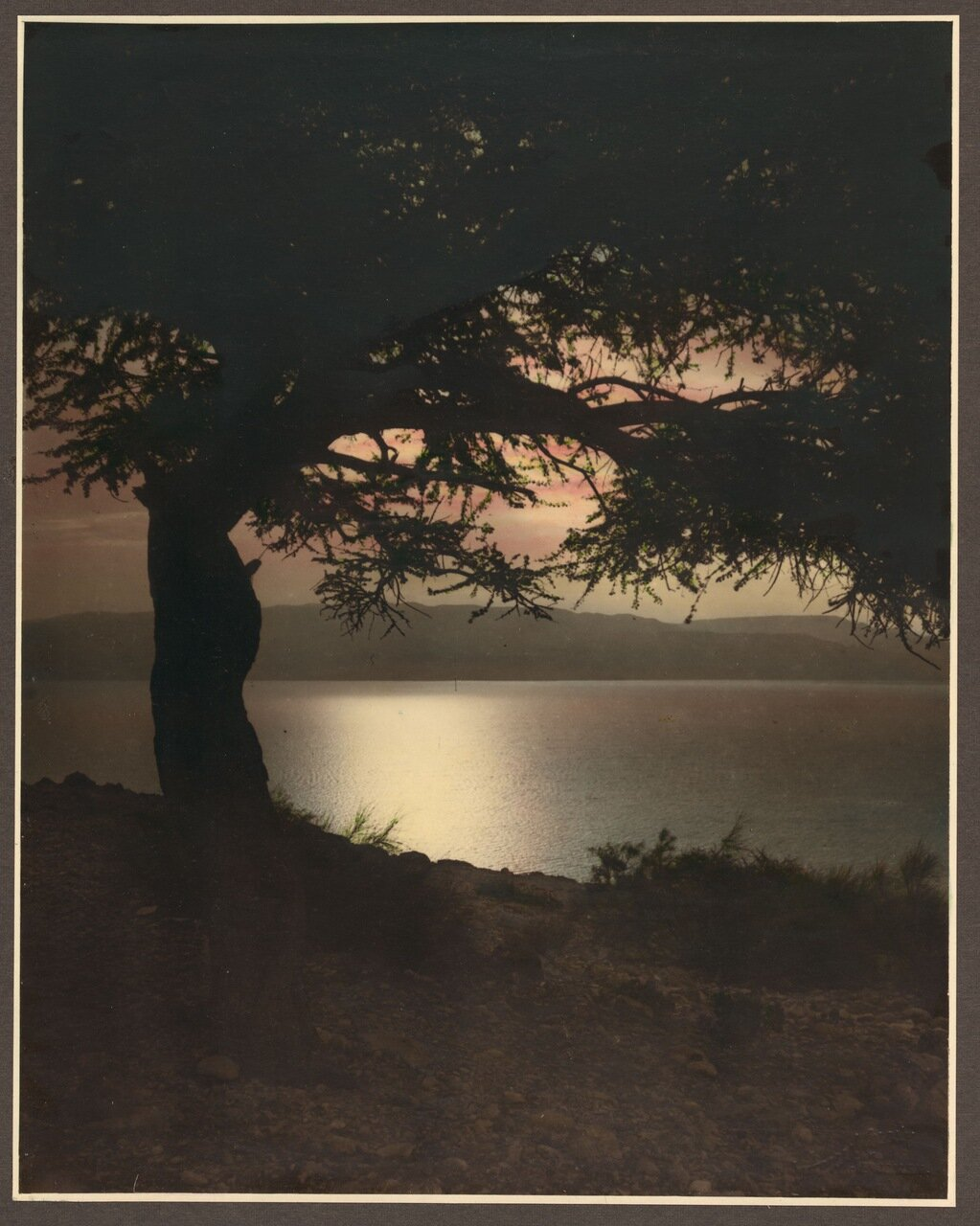 На берегу Галилейского моря