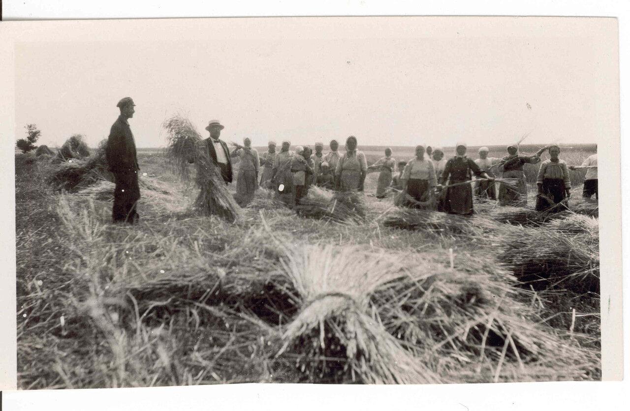 Типичная сцена сбора урожая в России