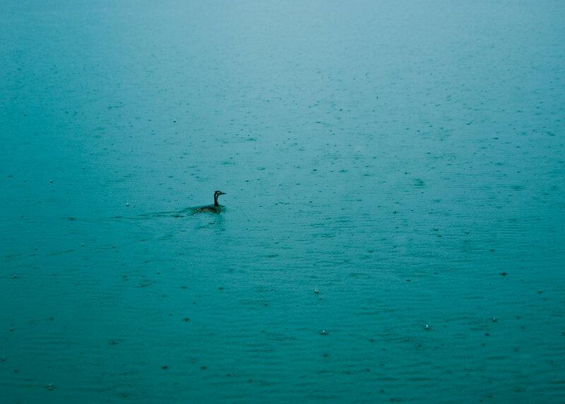 На Скадарсокм озере