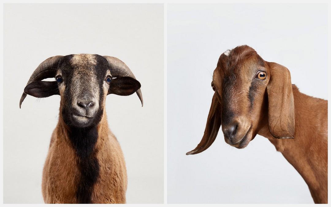 Восхитительные портретные снимки животных