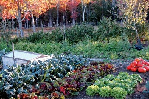 gardening-tips-for-beginners-in-south-africa.jpg