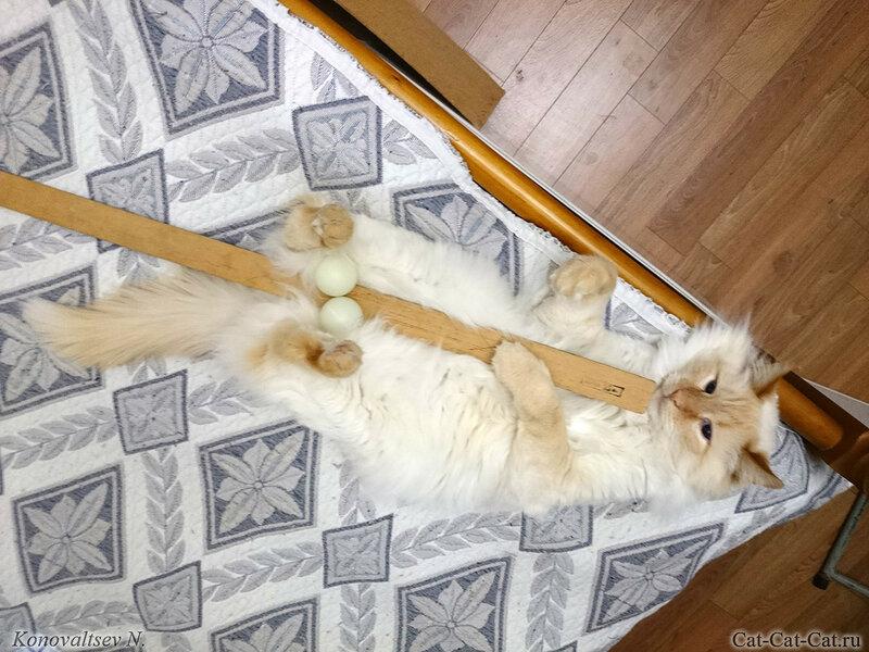 Кот Мотька