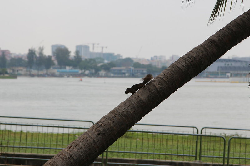Живность в Сингапуре