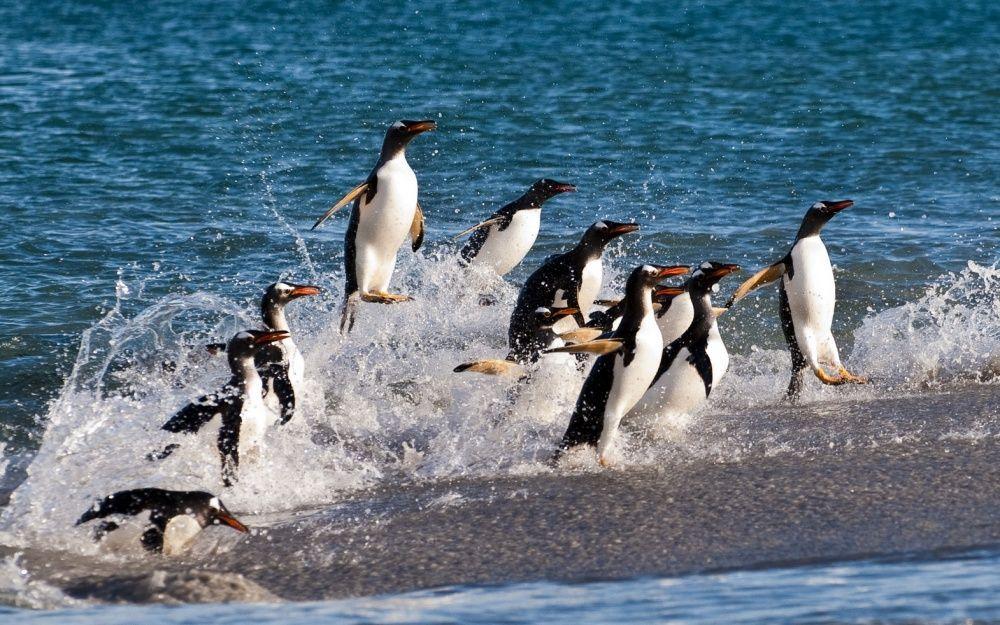 15. Серфинг, и-и-и-ха! (© Wetjens D.)