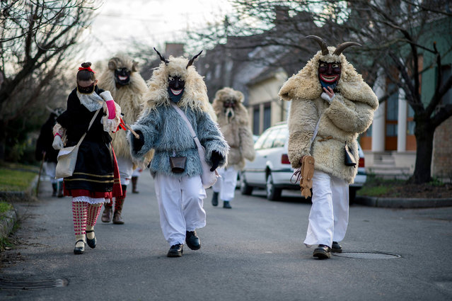 Revelers wearing sheepfur costumes walk during the traditional carnival parade in Mohacs, 189 kms so