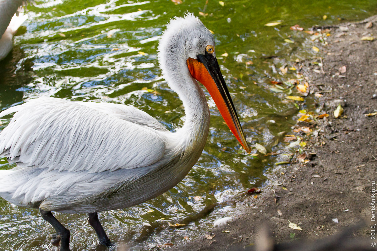 Пензенский зоопарк 2